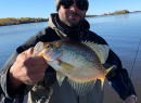 Fall 2020  Crappie